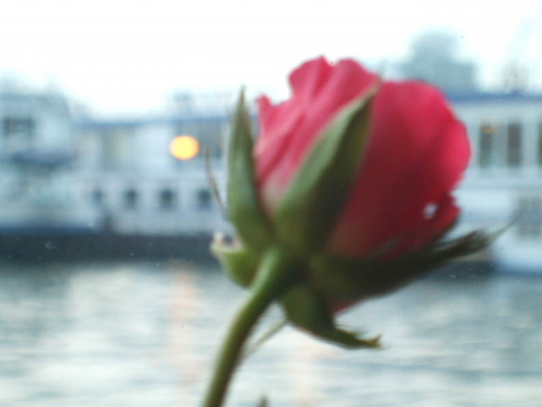 roses-and-barges_2407847823_o.jpg