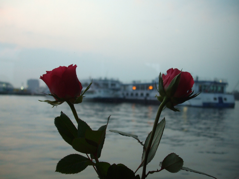 roses-and-barges_2408679760_o.jpg